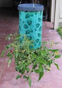 Topsy turvy planter image