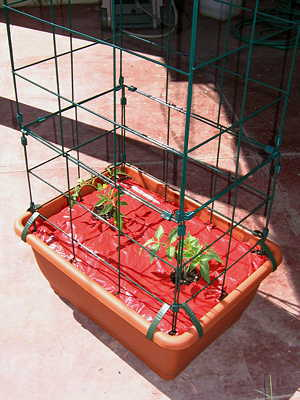 Tomato planter with seedlings, support cage and mulch picture